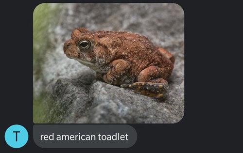 фотографии жаб и лягушек