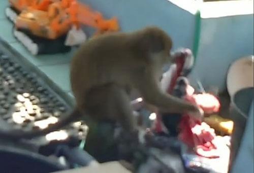обезьяна помогает со стиркой