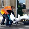 лебедей прогнали со станции