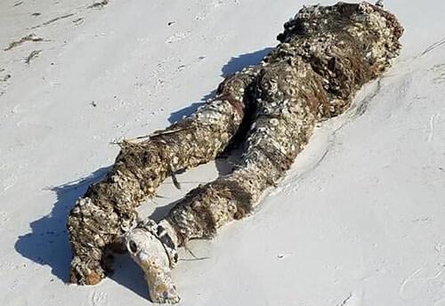безголовый труп на пляже