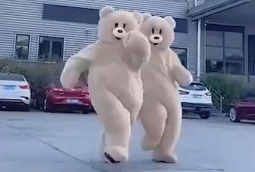 комичные медведи против стресса