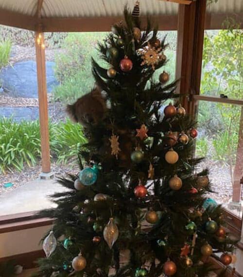 коала на праздничной ёлке