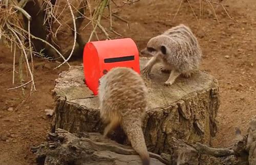сурикаты и ящик для писем