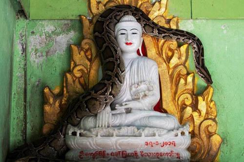 монах создал приют для змей