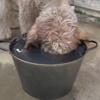 пёс испытывает жажду