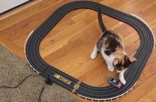 кошка с игрушечной машинкой