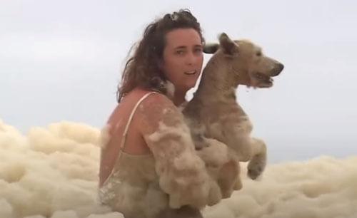 собака в морской пене
