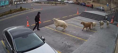 сбежавшие животные рядом с мэрией