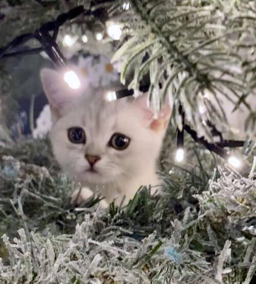 котёнок спрятался на ёлке
