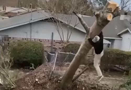 борьба с повреждённым деревом