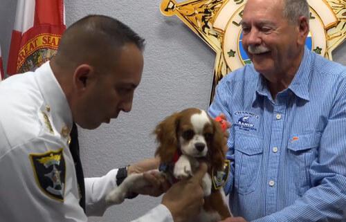 щенок стал помощником шерифа