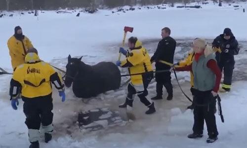 лошадь провалилась в пруд