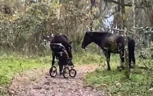 лошади украли детскую коляску
