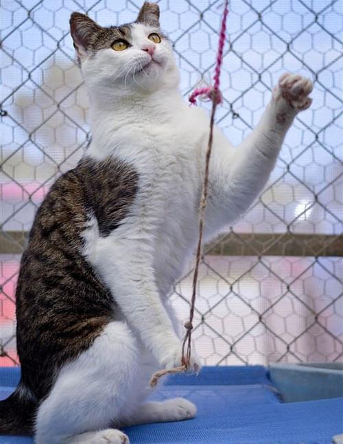 кот часто возвращается в приют
