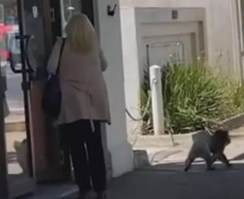 коала хочет попасть в магазин