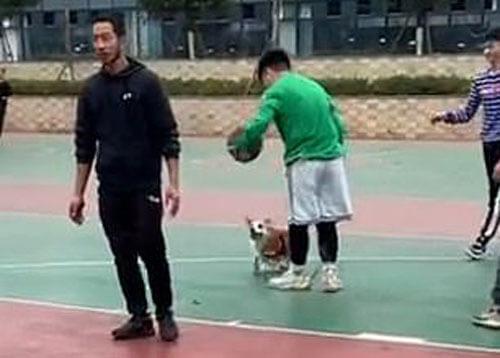 корги играет в баскетбол