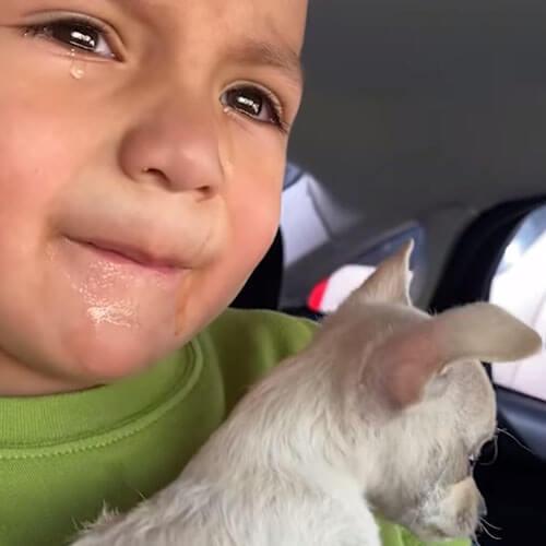 щенку сделали прививку