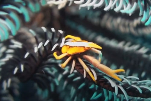 colorful crabs and shrimps