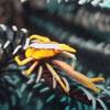 красочные крабы и креветки