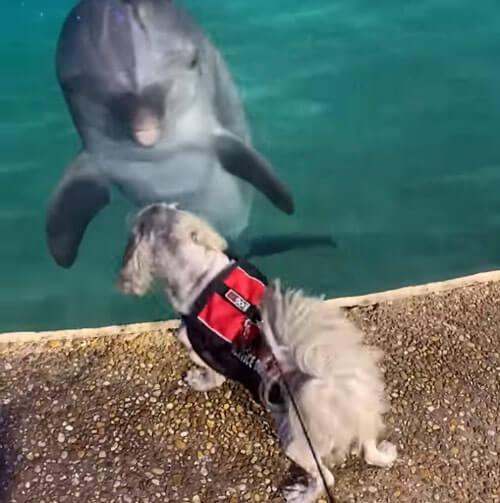 собака знакомится с дельфинами