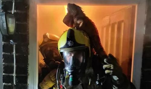 игуана на голове пожарного