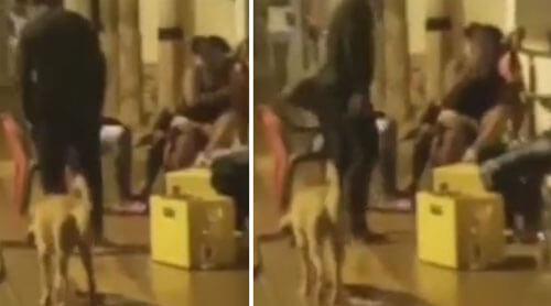 собаку попытались пнуть