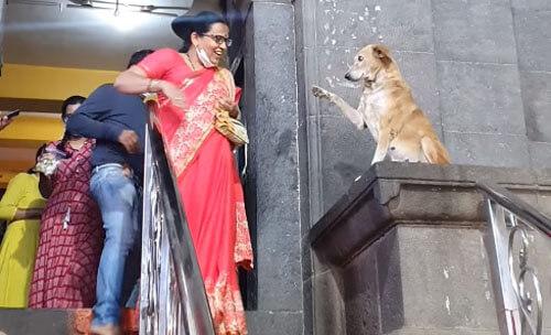 собака приходит к храму