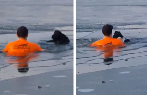 спасение собаки во время пробежки