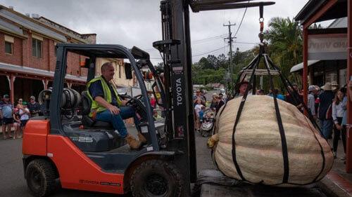 гигантская рекордная тыква