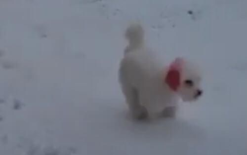 собака с красными ушами