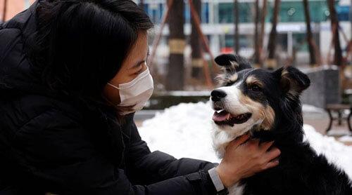 ошейник понимает эмоции собак