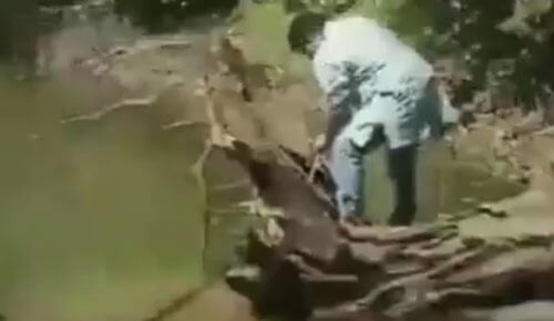 попытка поймать кобру