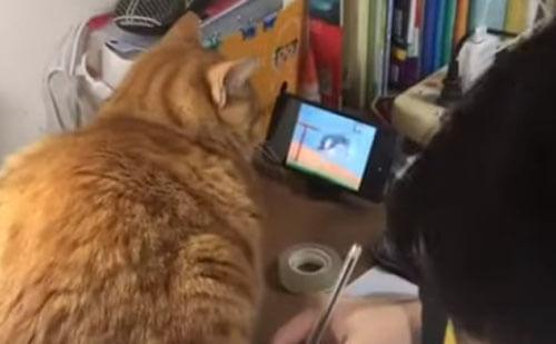 кошка смотрит мультфильмы