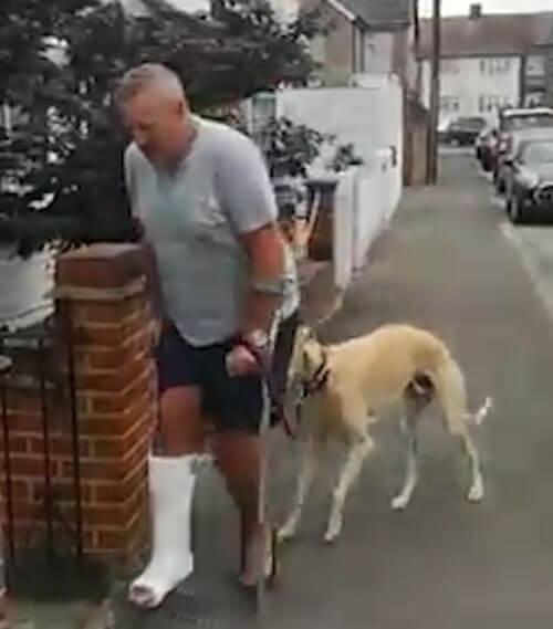 пёс повторяет походку хозяина