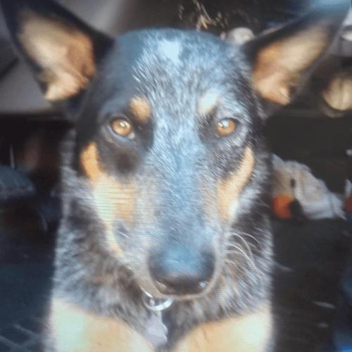 собака пропала вместе с машиной