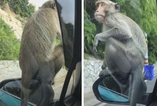 обезьяна на автомобильном зеркале
