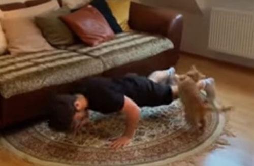 кошку раздражают упражнения