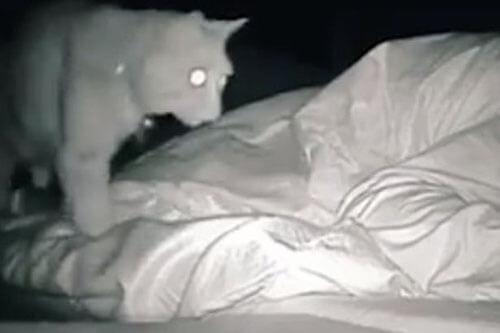 хозяйка кота не высыпается