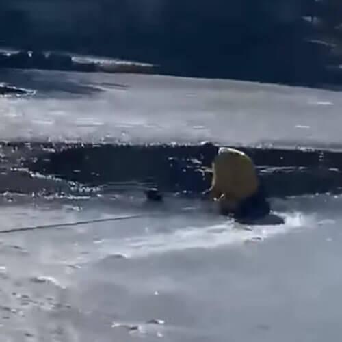 собака в ледяной воде