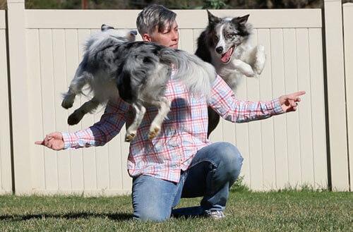 собаки выучили много трюков