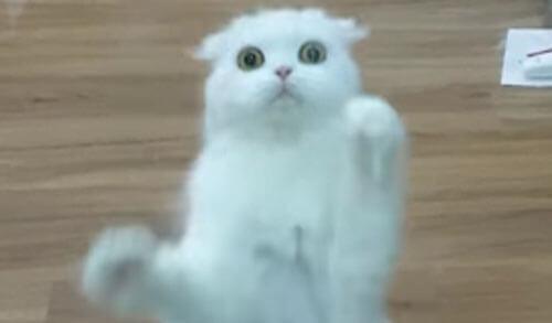 кошка жаждущая внимания