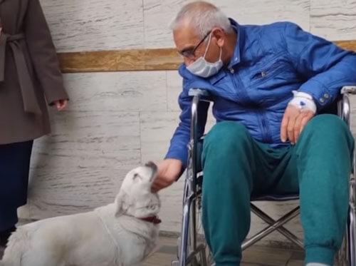 собака и хозяин в больнице