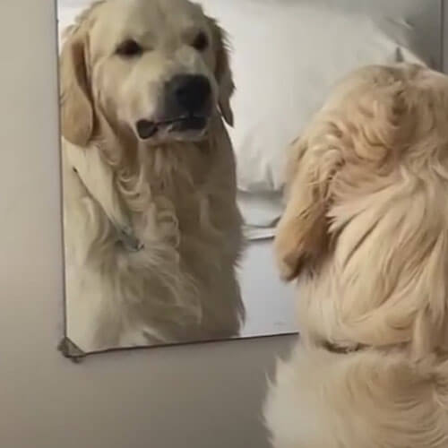 пёс делает злое лицо