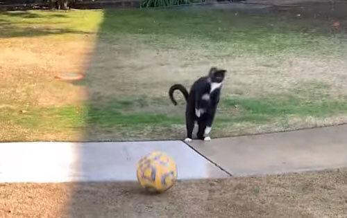 ниндзя-кот играет в футбол