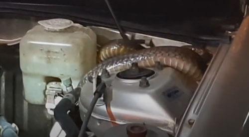 змея в двигателе машины