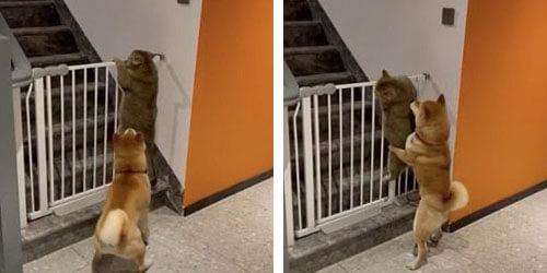 собака мешает кошке лезть