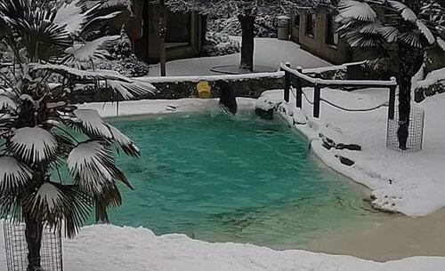 смотритель упал в бассейн