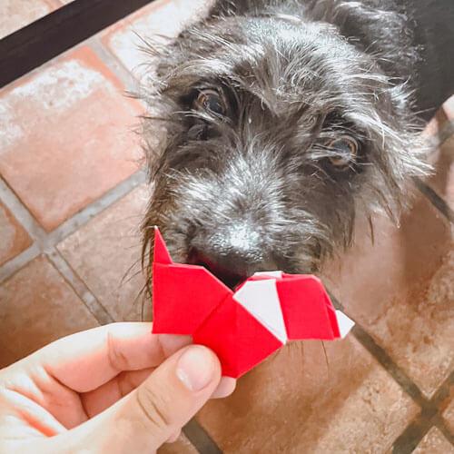 компания бумажных собачек
