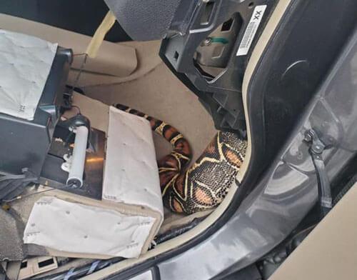домашний удав застрял в машине