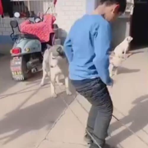 собака помогает играть в резиночку